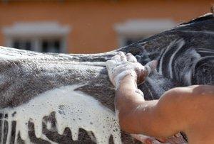 Údržba Kůň