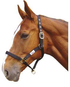 Harry's Horse Ovladač ohlávky