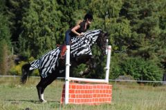 Bucas Riding Rug Zebra