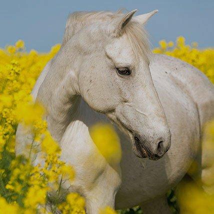 Deky od 165 cm (kůň)